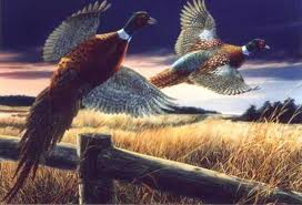 Pheasants fly